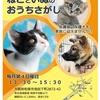 【大阪府和泉市 保護猫里親会(譲渡会)】第25回ねこといぬのおうちさがし@和泉市