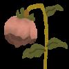 359   枯れっぱなしの花