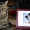 うちの猫との馴れ初めを。どんくさ猫⑤:ファイナル。ヒモ男、誕生。