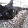 捨て猫らしき骨折した猫を保護しました