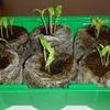 全種子 発芽