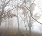 つつじ新道から丹沢主稜縦走!檜洞丸・蛭ヶ岳登山と紅葉の様子!(前編)