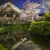 月桂冠裏の夜桜をもう一度捕まえる@2019