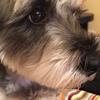 #愛犬のマーキングで困っている患者さんのお話。