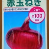 【栽培断念】「赤タマネギ」を半水耕で栽培中。収穫は半年後の来春を予定しています