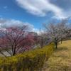 【長野県北安曇郡池田町】クラフトパークの桜情報2021