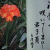 1月19日花と花言葉・歌句