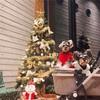12月のご予約について/冬季休業のお知らせ