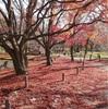 京都市植物園