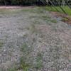 大畑の除草