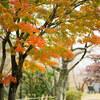 桜の名所、秦野市の弘法山公園に行って紅葉をCHECK