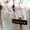 手賀沼の源流「こんぶくろ池」の雪景色