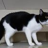 今日の黒猫モモ&白黒猫ナナの動画ー771