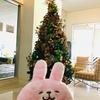セブでは今日から再びロックダウンですが、クリスマスのデコレーションがかなり華やかになってきました(*´▽`*)