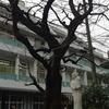 春到来♪いろいろ~桜の木(1)~