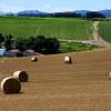 良く使われている小麦粉の正体とは・・・