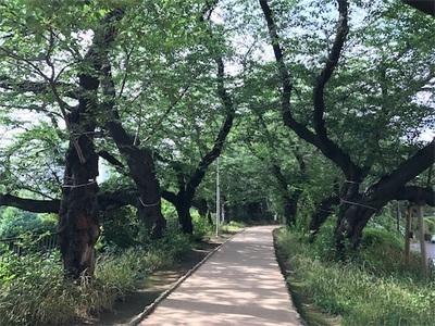外堀公園遊歩道ランニング〜四ツ谷駅→市ヶ谷駅→飯田橋駅〜