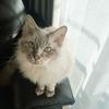 家庭内別居の猫と夫婦!多頭飼いするなら隔離できる部屋を確保して!