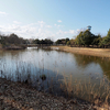 古代蓮の里 水鳥の池(埼玉県行田)