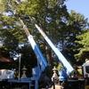 枯れ枝の除去作業が行われました。