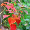 garden*note