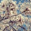 一日一撮 vol.174 桜、咲き始めた