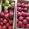 【食費の節約】リンゴと柿や金萬の差し入れ♪上手な貯蔵方法は?