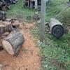 原木 玉切り完了 Raw wood