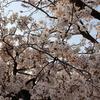 4/7 33節 2日目 琉球ゴールデンキングスVS京都ハンナリーズ戦評