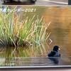 野鳥カレンダー 2021年1月