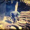 自分の映画歴語りその9/未公開作品『木炭をつくる』