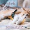 【ボキャブラリー】猫にまつわる英単語