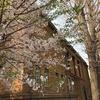 【東京散策】上野の桜。東京の桜もこれでフィナーレ⁈そして黒田記念館特別室へ(2019/4/7)