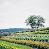 写ルンですで信州国際音楽村のラベンダー畑を撮ってみた