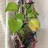 リサイクルサリー糸でプラントハンガーを作りました