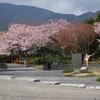 箱根彫刻の森美術館の桜