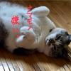 ネコは肉食のケモノ