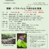 ◇箱根・イワタバコと千仞の谷を散策◇