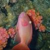 モアルボアル ペスカドール島のダイビングへ行ってきました!
