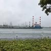 横浜 根岸港 釣果