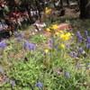 お庭で花見