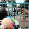野毛山動物園で動物園デビュー。入園料無料、お昼持参で楽しい一時