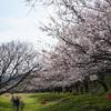桜クエスト2018(走水水源地)