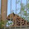 ヘルシンキ動物園へ_フィンランド・エストニア旅行2017_Day1_5