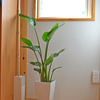 ふるさと納税「さとふる」で観葉植物が我が家に!& 簡単でおすすめな楽天でふるさと納税したもの