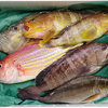 寄稿:何が届くかわからない生魚ガチャ! 産地直送の「お任せ鮮魚セット」を余すことなく楽しむ方法