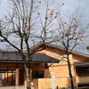 月岡小の柿の木