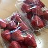 徳島|農家さんの苺 場所はちょっとわかりにくい