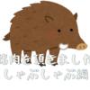 猪肉のしゃぶしゃぶ 美味しい猪肉の理由と食べ方