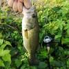 バス釣り2019(32)【猛暑の新利根川釣行!】